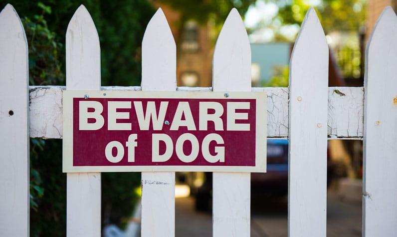 Vancouver, WA Dog Bite Lawyer